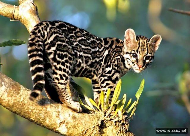 Kỳ thú khu tự nhiên hoang dã Pantanal - Brazil ảnh 18