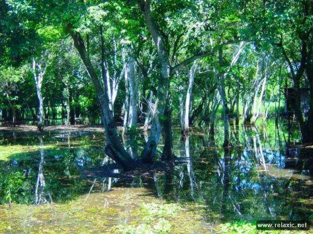 Kỳ thú khu tự nhiên hoang dã Pantanal - Brazil ảnh 19