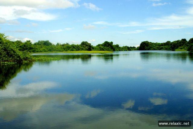 Kỳ thú khu tự nhiên hoang dã Pantanal - Brazil ảnh 21