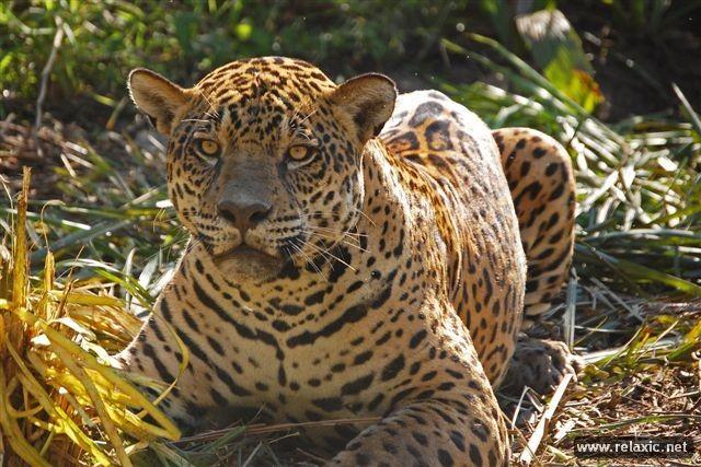 Kỳ thú khu tự nhiên hoang dã Pantanal - Brazil ảnh 25