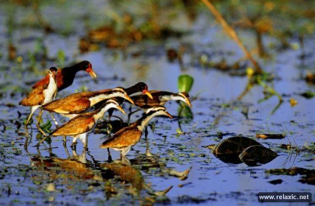 Kỳ thú khu tự nhiên hoang dã Pantanal - Brazil ảnh 30