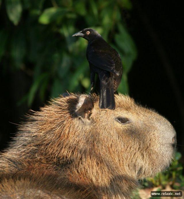 Kỳ thú khu tự nhiên hoang dã Pantanal - Brazil ảnh 31