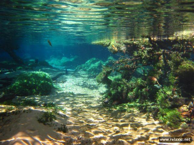 Kỳ thú khu tự nhiên hoang dã Pantanal - Brazil ảnh 33