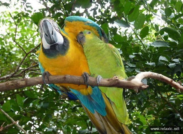 Kỳ thú khu tự nhiên hoang dã Pantanal - Brazil ảnh 35