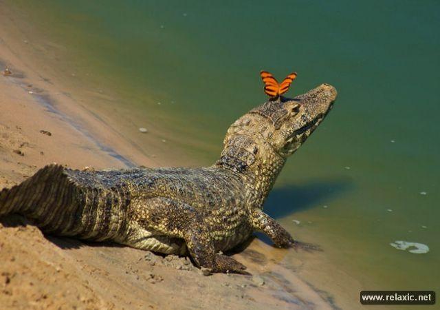 Kỳ thú khu tự nhiên hoang dã Pantanal - Brazil ảnh 38