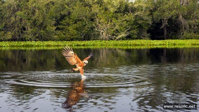 Kỳ thú khu tự nhiên hoang dã Pantanal - Brazil ảnh 39