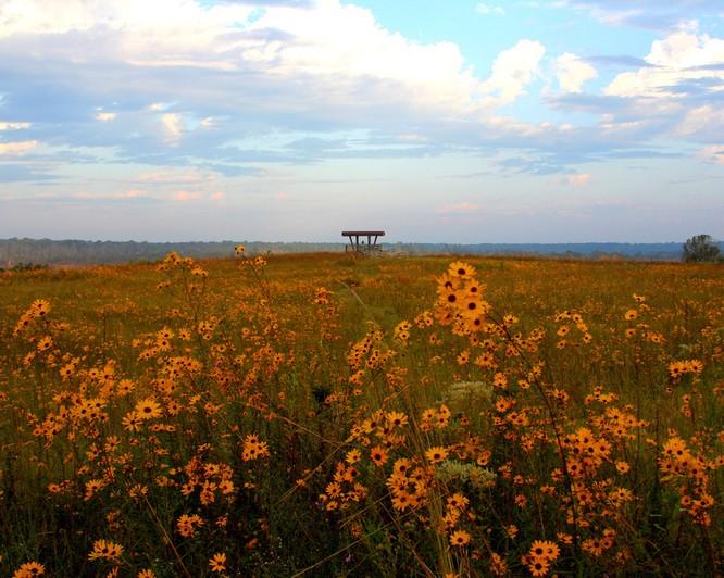 Tuyệt đẹp cảnh sắc mùa thu trên khắp nước Mỹ ảnh 26