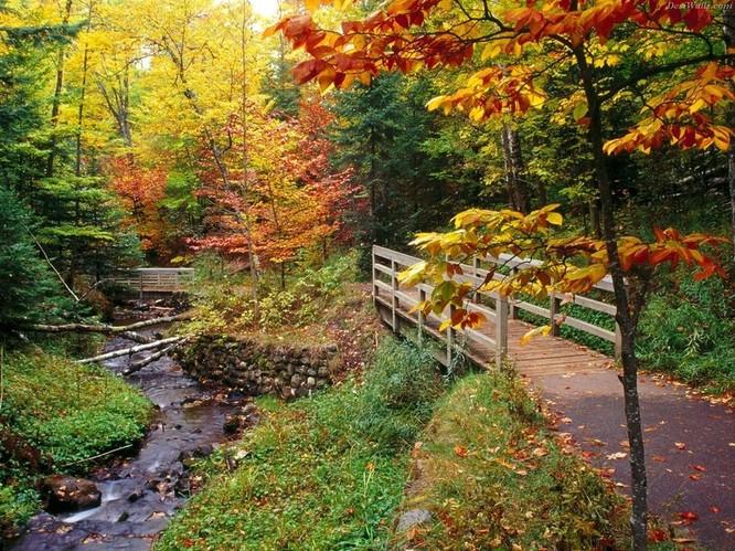 Tuyệt đẹp cảnh sắc mùa thu trên khắp nước Mỹ ảnh 28