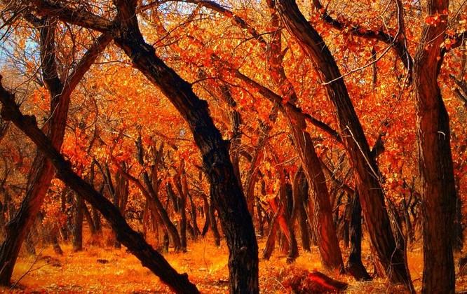 Tuyệt đẹp cảnh sắc mùa thu trên khắp nước Mỹ ảnh 37