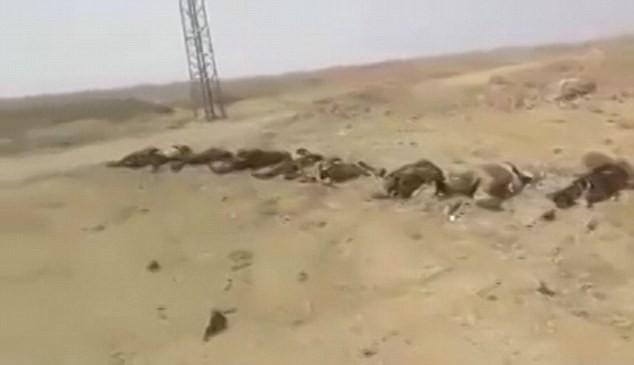 Video: Hàng trăm chiến binh IS chết la liệt sau trận đánh ảnh 2