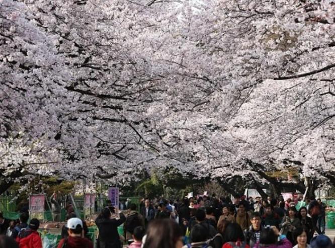 Du khách tham quan ở Thủ đô Tokyo, Nhật Bản. Ảnh: Cankao