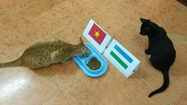 Dân mạng nhờ mèo, gà, cào cào dự đoán trận chung kết của U23 Việt Nam - Ảnh 1