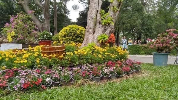 8 địa điểm chụp ảnh Xuân đẹp ở Sài Gòn - Ảnh 2