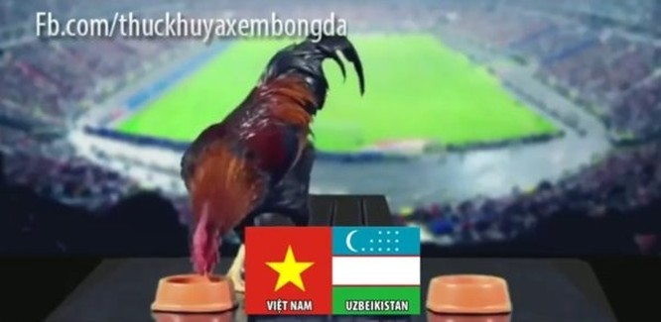 Dân mạng nhờ mèo, gà, cào cào dự đoán trận chung kết của U23 Việt Nam - Ảnh 4