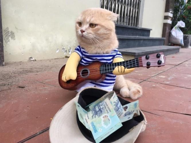 Chú mèo tên Chó ở Hải Phòng gây sốt trên Internet vì 'thần thái' quá dễ thương - Ảnh 10