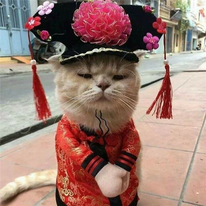 Chú mèo tên Chó ở Hải Phòng gây sốt trên Internet vì 'thần thái' quá dễ thương - Ảnh 11