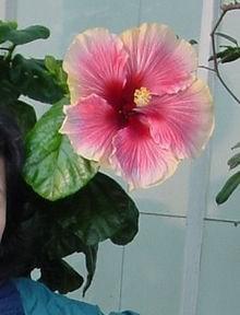 Ý nghĩa các loài hoa dành cho cư dân @ nhân Ngày Quốc tế Phụ nữ 8/3 - Ảnh 13