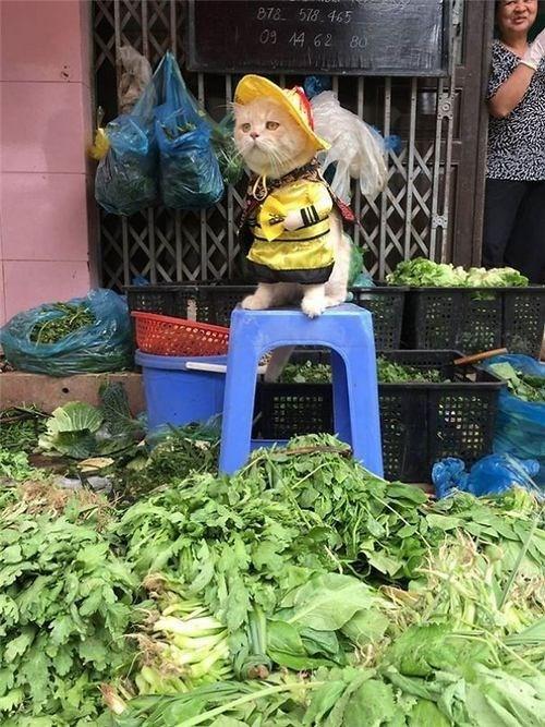 Chú mèo tên Chó ở Hải Phòng gây sốt trên Internet vì 'thần thái' quá dễ thương - Ảnh 13