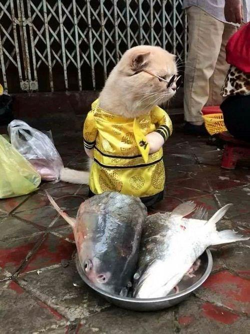 Chú mèo tên Chó ở Hải Phòng gây sốt trên Internet vì 'thần thái' quá dễ thương - Ảnh 14