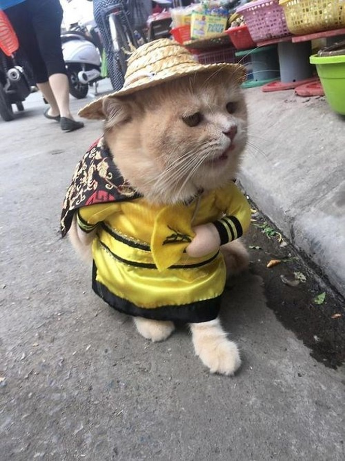 Chú mèo tên Chó ở Hải Phòng gây sốt trên Internet vì 'thần thái' quá dễ thương - Ảnh 16