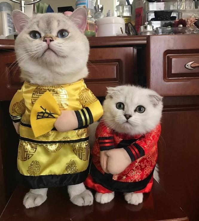 Chú mèo tên Chó ở Hải Phòng gây sốt trên Internet vì 'thần thái' quá dễ thương - Ảnh 17