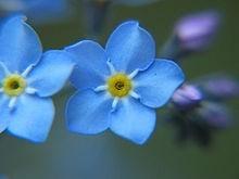 Ý nghĩa các loài hoa dành cho cư dân @ nhân Ngày Quốc tế Phụ nữ 8/3 - Ảnh 17