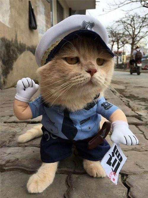 Chú mèo tên Chó ở Hải Phòng gây sốt trên Internet vì 'thần thái' quá dễ thương - Ảnh 18
