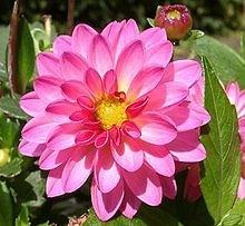 Ý nghĩa các loài hoa dành cho cư dân @ nhân Ngày Quốc tế Phụ nữ 8/3 - Ảnh 21