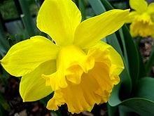 Ý nghĩa các loài hoa dành cho cư dân @ nhân Ngày Quốc tế Phụ nữ 8/3 - Ảnh 22