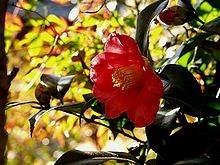 Ý nghĩa các loài hoa dành cho cư dân @ nhân Ngày Quốc tế Phụ nữ 8/3 - Ảnh 25