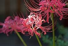 Ý nghĩa các loài hoa dành cho cư dân @ nhân Ngày Quốc tế Phụ nữ 8/3 - Ảnh 27