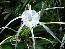 Ý nghĩa các loài hoa dành cho cư dân @ nhân Ngày Quốc tế Phụ nữ 8/3 - Ảnh 28