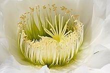 Ý nghĩa các loài hoa dành cho cư dân @ nhân Ngày Quốc tế Phụ nữ 8/3 - Ảnh 32