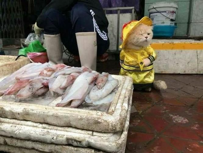 Chú mèo tên Chó ở Hải Phòng gây sốt trên Internet vì 'thần thái' quá dễ thương - Ảnh 4