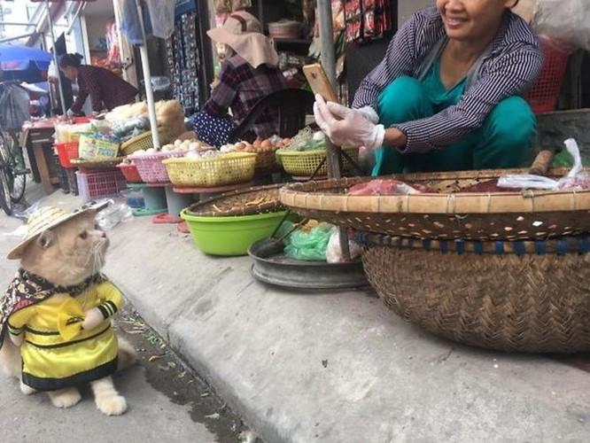 Chú mèo tên Chó ở Hải Phòng gây sốt trên Internet vì 'thần thái' quá dễ thương - Ảnh 6