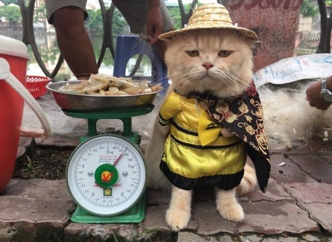 Chú mèo tên Chó ở Hải Phòng gây sốt trên Internet vì 'thần thái' quá dễ thương - Ảnh 9