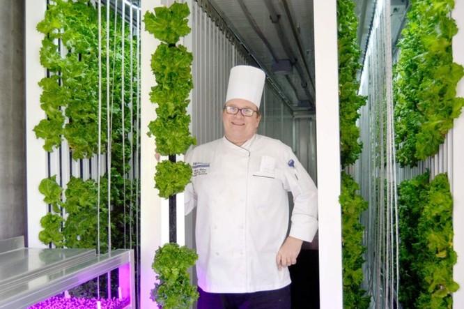 'Nông dân kiểu mới' có thể trồng được 4 tấn nông sản/năm mà không cần ánh sáng mặt trời - Ảnh 1