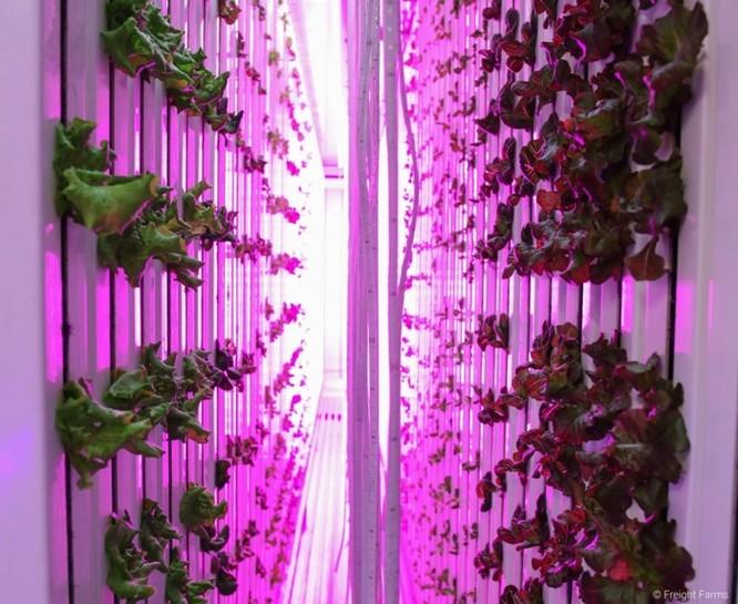 'Nông dân kiểu mới' có thể trồng được 4 tấn nông sản/năm mà không cần ánh sáng mặt trời - Ảnh 2