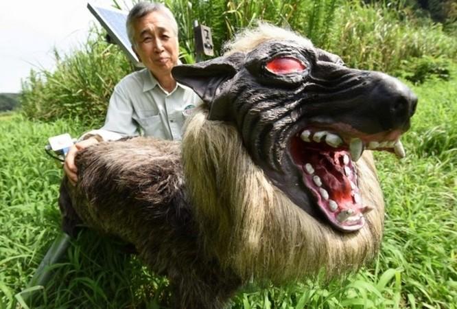Robot... chó sói hỗ trợ nông dân Nhật bảo vệ mùa màng trước các loài phá hoại - Ảnh 1