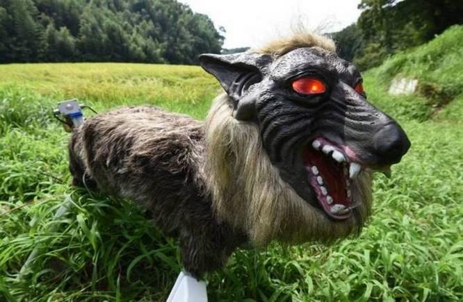 Robot... chó sói hỗ trợ nông dân Nhật bảo vệ mùa màng trước các loài phá hoại - Ảnh 4