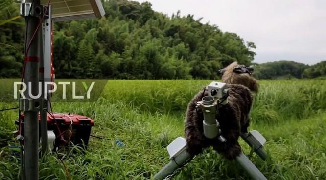 Robot... chó sói hỗ trợ nông dân Nhật bảo vệ mùa màng trước các loài phá hoại - Ảnh 7