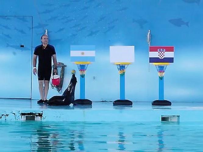 Hải cẩu Molly đến từ Việt Nam dự đoán Argentina thắng Croatia ảnh 1