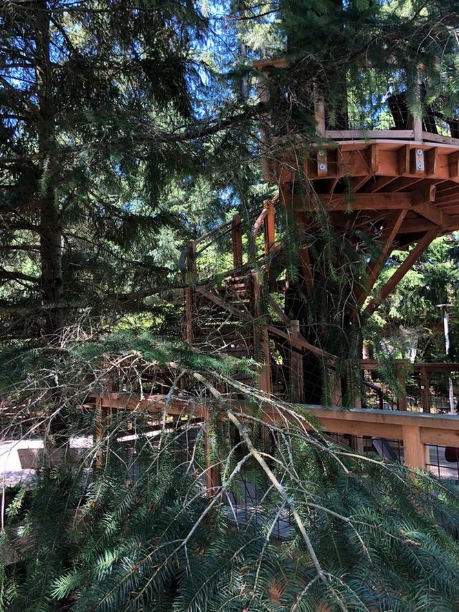 Thăm quan nhà cây Microsoft xây riêng cho nhân viên nghỉ dưỡng ảnh 12