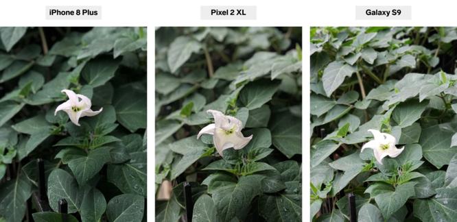 So sánh ảnh chụp trên iPhone 8 Plus, Pixel 2 XL và Galaxy S9 ảnh 3