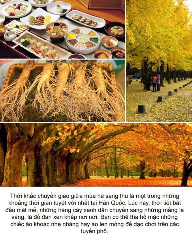 Photo Story - Đây là thời điểm tuyệt vời để đến Hàn Quốc ảnh 1