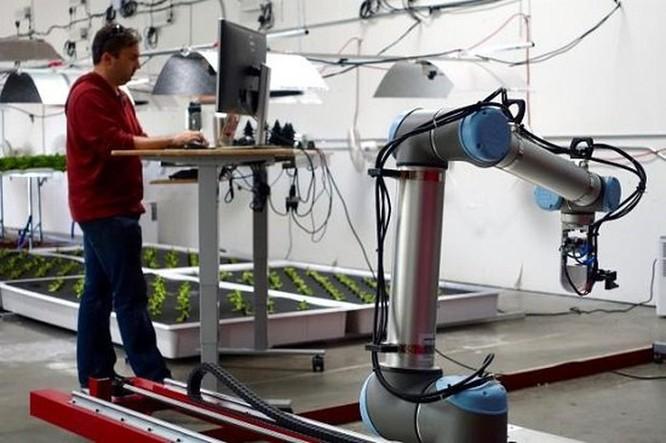 Nông trại đầu tiên ở Mỹ hoàn toàn thay thế con người bằng robot ảnh 2