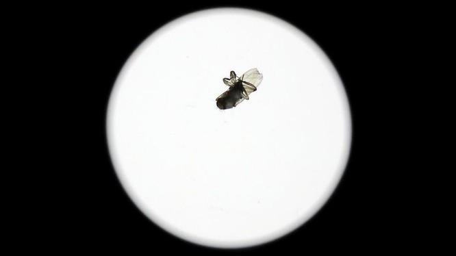 Vì sao con ruồi to lọt vào ống kính máy ảnh 2.000 USD? ảnh 1