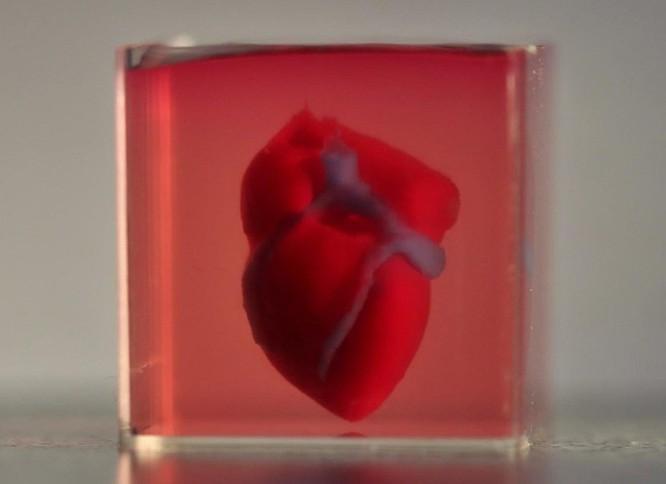 In 3D thành công quả tim dùng chính tế bào của bệnh nhân ảnh 1
