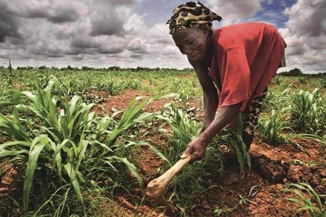 AfDB và Hàn Quốc tăng cường hỗ trợ ngành nông nghiệp châu Phi ảnh 1