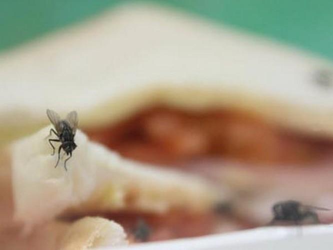 Loài ruồi - 'vị cứu tinh' đắc dụng xử lý các loại thực phẩm thừa ảnh 1